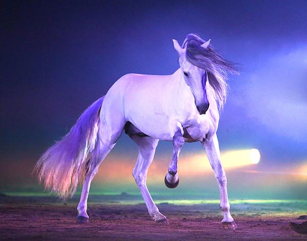 Apassionata Pferde